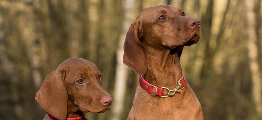 Výcvikové obojky pro psy